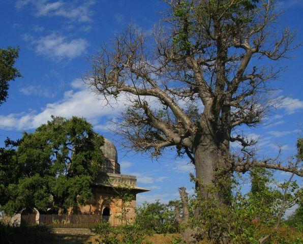 Image of Tree c062