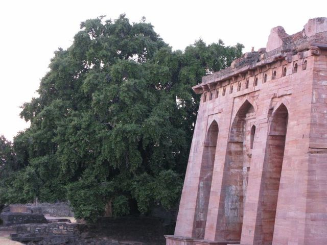 Image of Tree c063