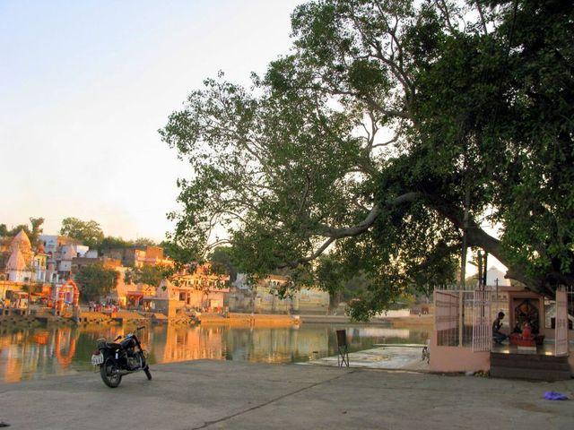 Image of Tree c066