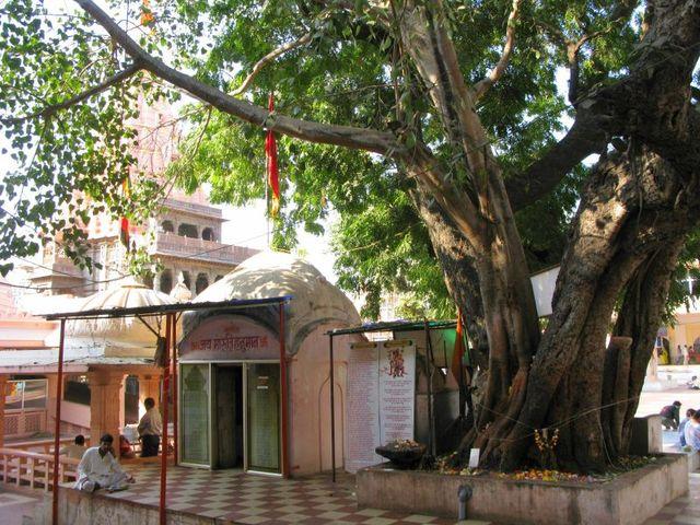 Image of Tree c068