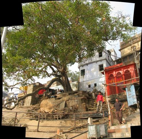 Image of Tree c071