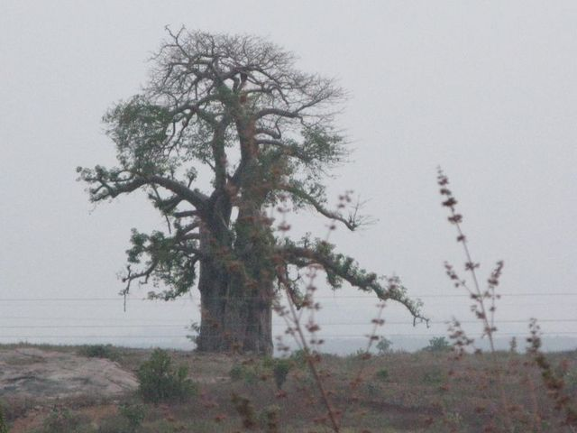 Image of Tree c073