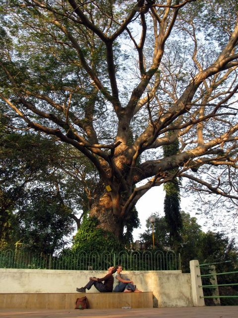 Image of Tree d003