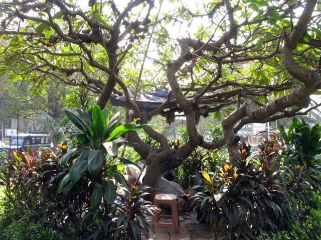 Image of Tree d009