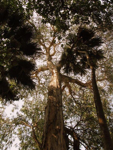 Image of Tree d012