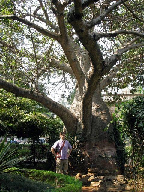 Image of Tree d014