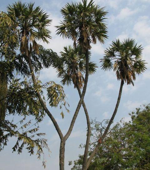 Image of Tree d018