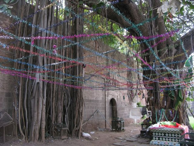 Image of Tree d025