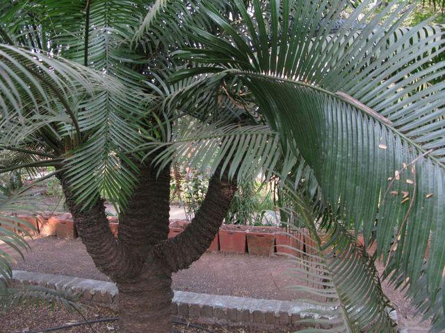 Image of Tree d030
