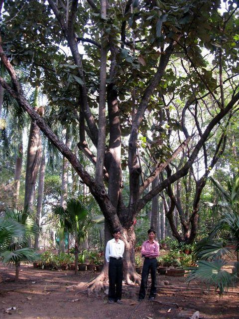 Image of Tree d031