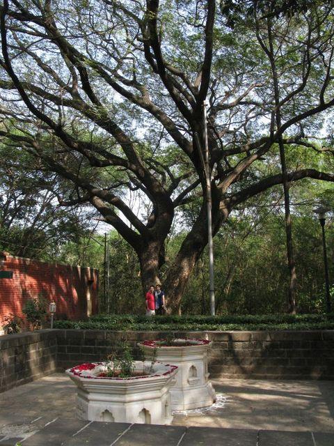 Image of Tree d036