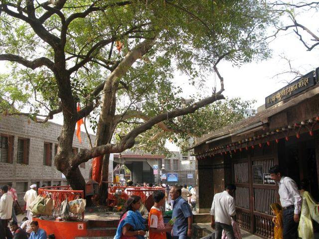 Image of Tree d040