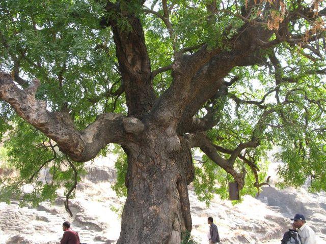 Image of Tree d043