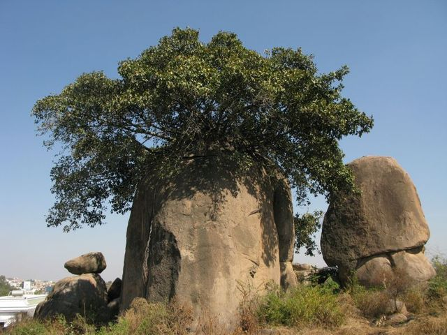 Image of Tree d052