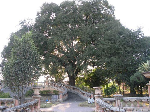 Image of Tree d054