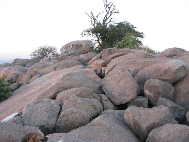Image of Tree d055