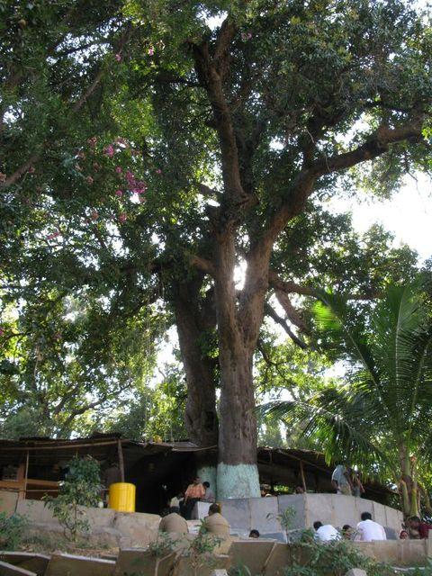 Image of Tree d060