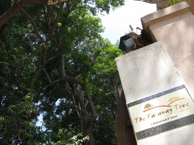 Image of Tree d071