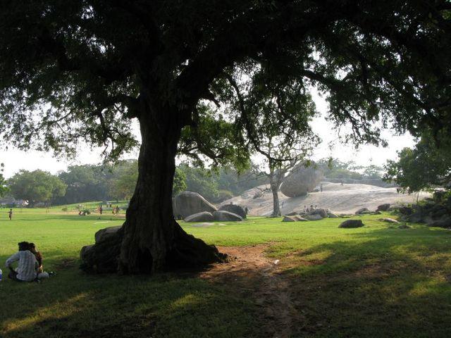 Image of Tree d076