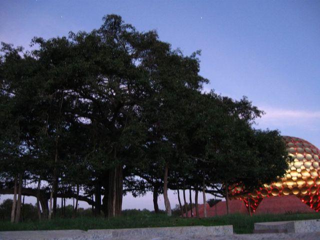 Image of Tree d086
