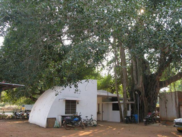 Image of Tree d090