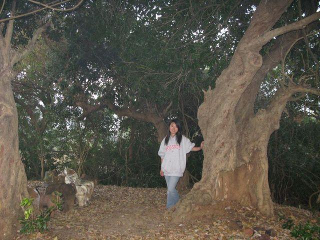 Image of Tree d091