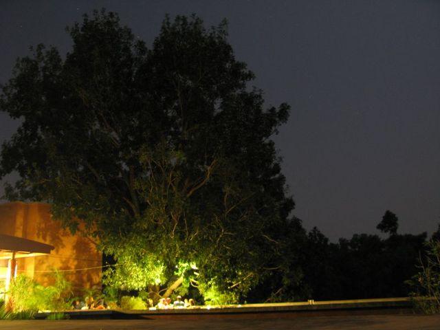 Image of Tree d095