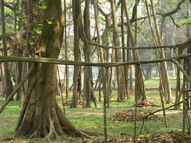 Image of Tree e001