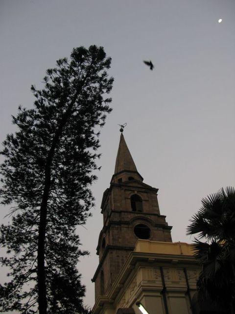 Image of Tree e010