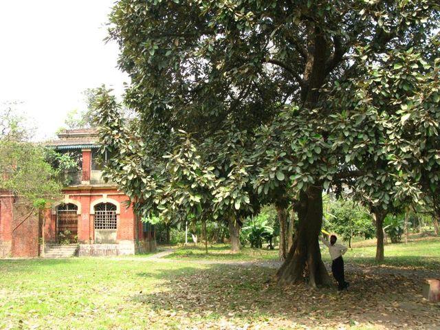 Image of Tree e013