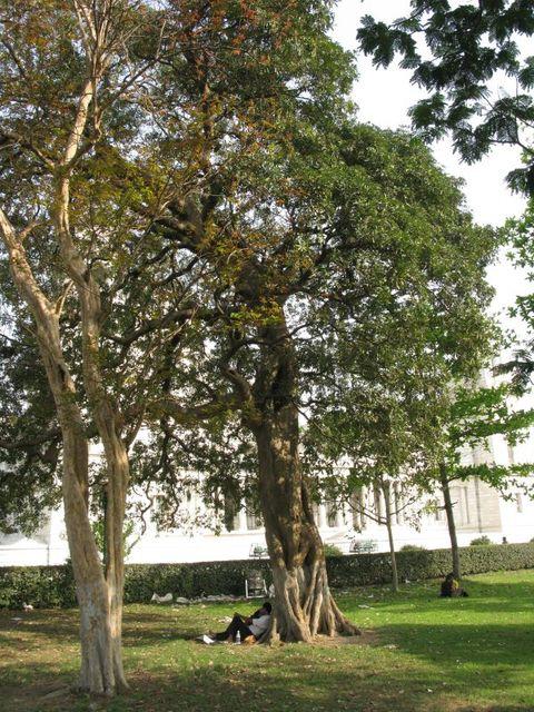 Image of Tree e019