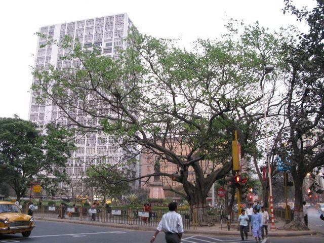 Image of Tree e027