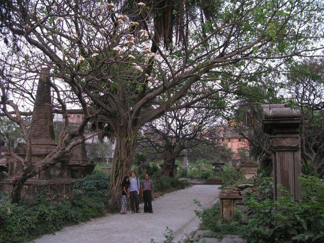 Image of Tree e028