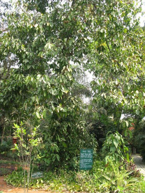 Image of Tree e029