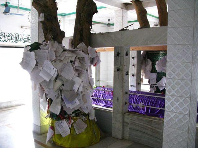 Image of Tree e033