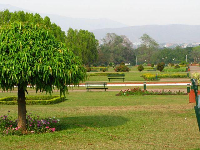 Image of Tree e034