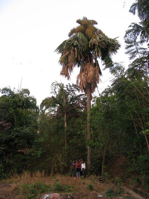 Image of Tree f006