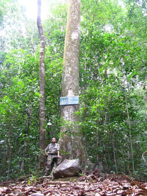 Image of Tree f007