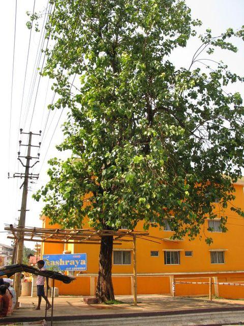 Image of Tree f008
