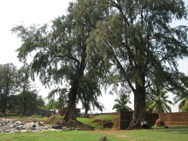 Image of Tree f010