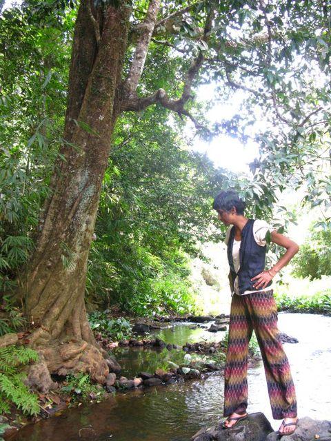 Image of Tree f015