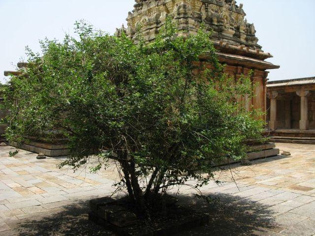 Image of Tree f023