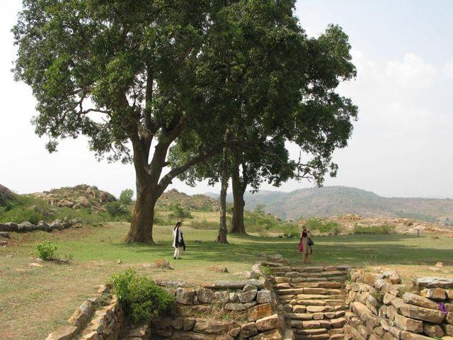 Image of Tree f025