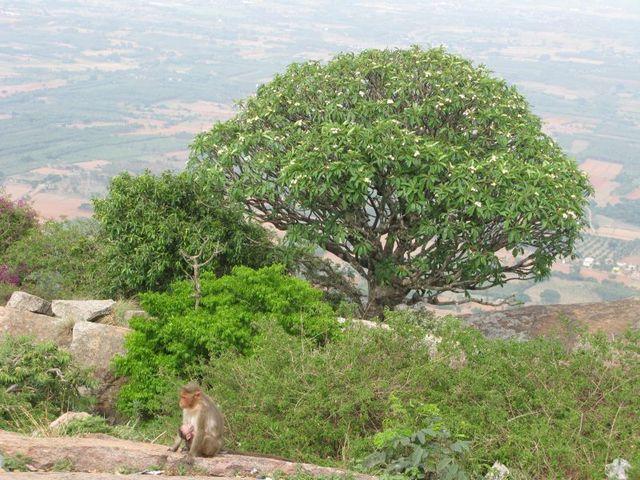 Image of Tree f029