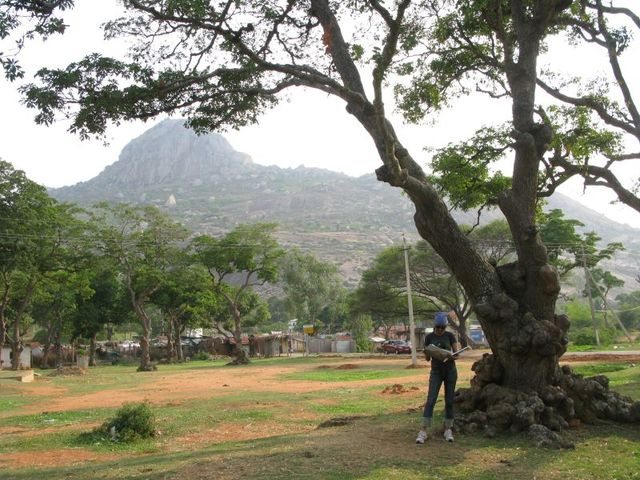 Image of Tree f031