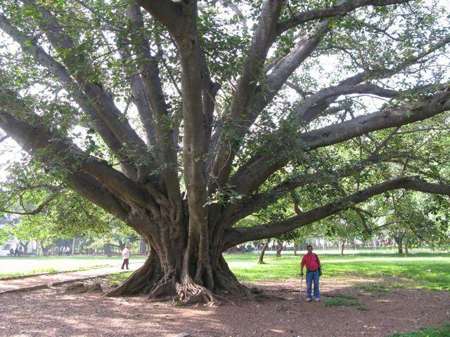 Image of Tree f034