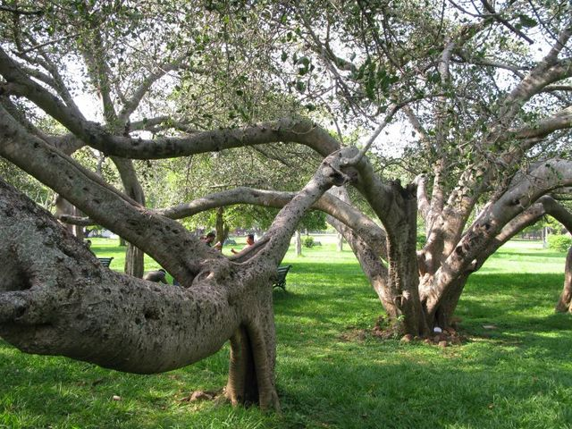 Image of Tree f035
