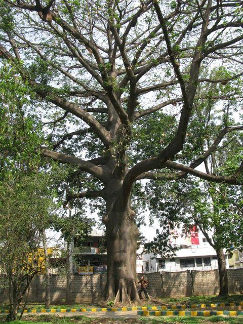 Image of Tree f040