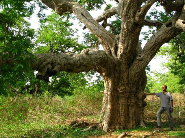 Image of Tree f045