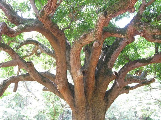 Image of Tree f051